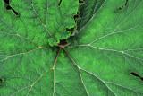 Feb122012_6832 fern forest bolivia.jpg