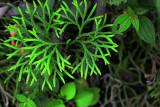 Feb122012_6836 fern forest bolivia.jpg