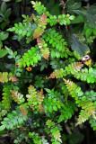 Feb122012_6838 fern forest bolivia.jpg
