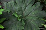 Feb122012_6841 fern forest bolivia.jpg