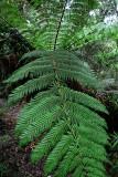 Feb122012_6865 fern forest bolivia.jpg