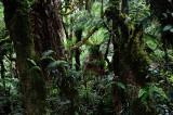 Feb122012_6867 fern forest bolivia.jpg