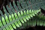 Feb122012_6873 fern forest bolivia.jpg