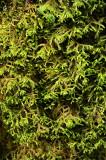 Feb122012_6879 fern forest bolivia.jpg