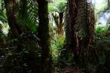 Feb122012_6884 fern forest bolivia.jpg