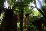 Feb122012_6886 fern forest bolivia.jpg