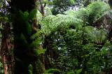 Feb122012_6888 fern forest bolivia.jpg