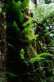 Feb122012_6890 fern forest bolivia.jpg