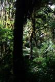 Feb122012_6900 fern forest bolivia.jpg