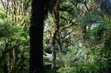 Feb122012_6901 fern forest bolivia.jpg