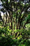 Feb122012_6905 fern forest bolivia.jpg