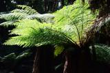 Feb122012_6911 fern forest bolivia.jpg