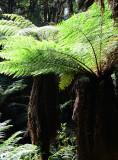 Feb122012_6912 fern forest bolivia.jpg