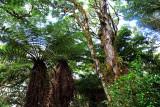 Feb122012_6919 fern forest bolivia.jpg