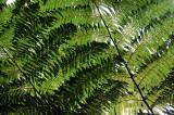 Feb122012_6922 fern forest bolivia.jpg