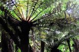 Feb122012_6924 fern forest bolivia.jpg