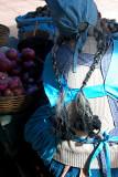 Market Seller in Sucre Market