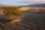Death Valley/Mojave Desert 2012