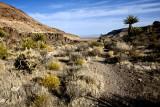 trail-Mojave Desert