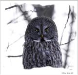 gg owl.jpg