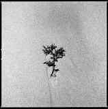 Flowers/Plants/Fruits