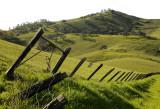 Mt. Diablo Foothills
