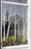 Window Forest