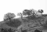 Mt. Diablo Hillside