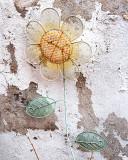 February's Sunflower
