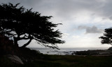 Lone Cypress, Pacific Grove (CA)