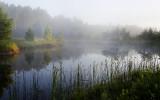 Morning Mist on the Pond