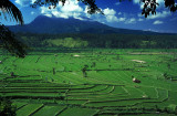 Rice Fields under Volcano