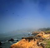 Pelicans Over Moonstone Beach
