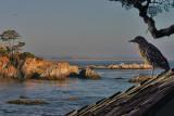 Shel Beach CA