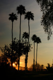 Palm Springs Evening