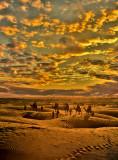 Sam Dunes India