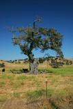 California Pastoral