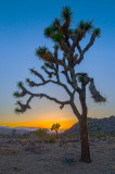Sunset on Joshua Tree Park