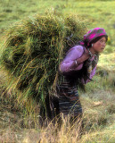 Young Woman Working Barley Harvest