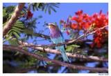 Kenya's Birds