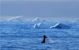 Cierva Cove Antarctica  DSC_7039.JPG