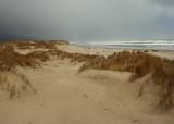 manzanita wintry dunes