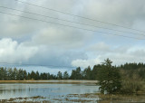wetlands again