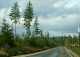 timber harvest country