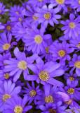 25 Spring Purples