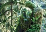 6 Rainforest Couple