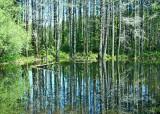 11 summer beaver pond