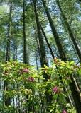 13 wild forest rhodies