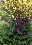 77 kale gone to flower
