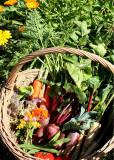 harvest basket 2